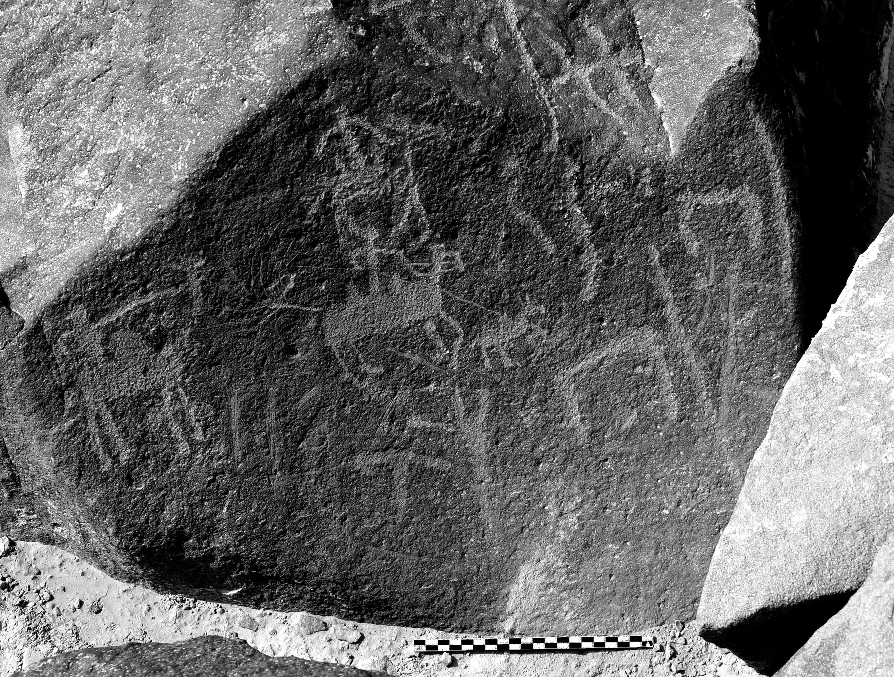 Fig. 1. Safaitic rock art from Jabal Qurma (site QUR-2, RA184), showing hunters on horses and camels. Dated between the first century B.C.E. and the fourth century C.E. (courtesy Jabal Qurma Archaeological Landscape Project).