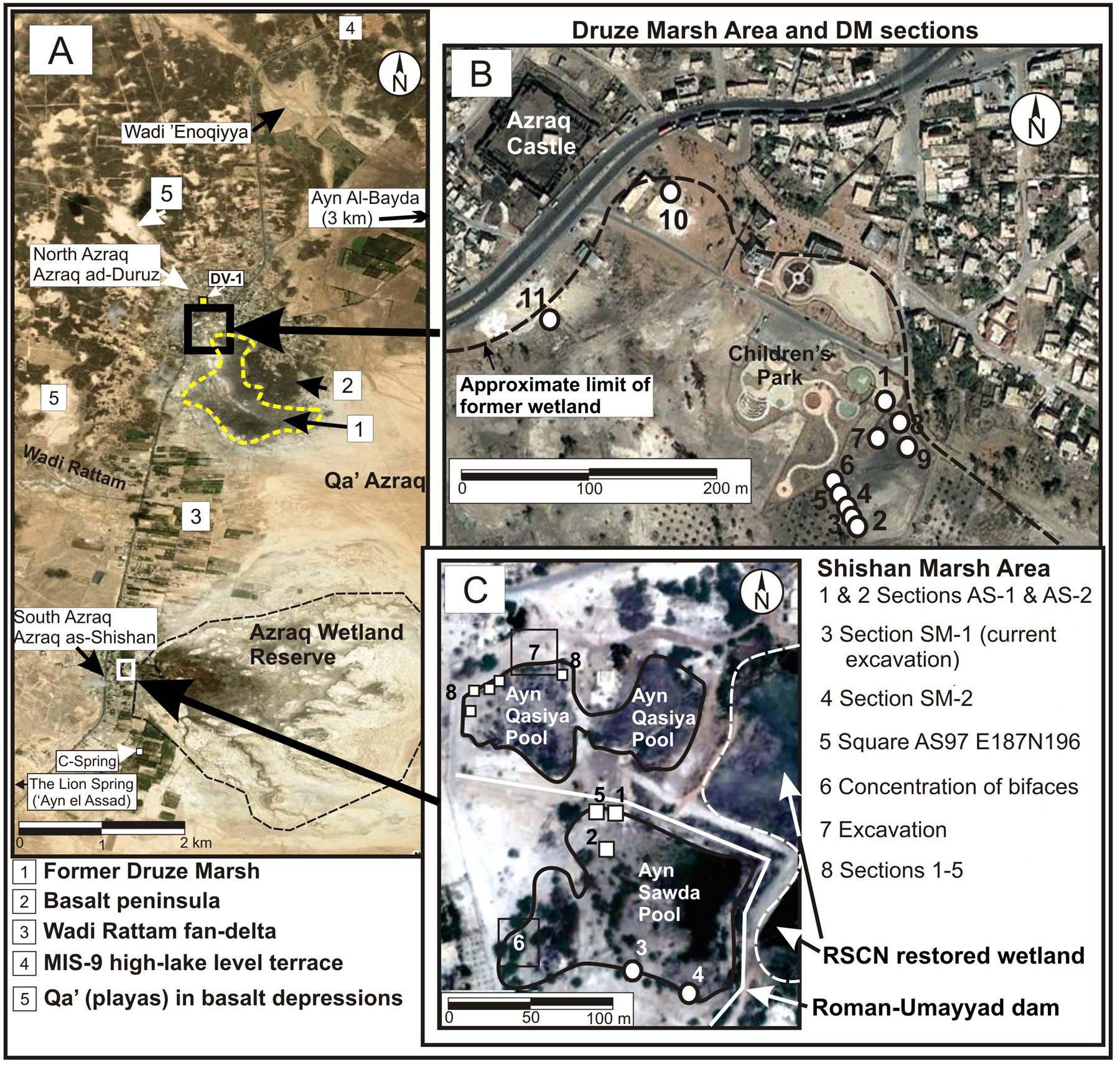 Fig. 4. Azraq Marshes: A, the Greater Azraq Oases Area, of which the Druze and Shishan Marshes are a part; B, the Druze Marsh, with the locations of the Azraq Marshes Archaeological and Paleoecological Project (AMAPP) team's excavations (circles); C, the Shishan Marsh area, with locations of the AMAPP team's excavations (circles) and previous excavations (squares) (courtesy Azraq Marshes Archaeological and Paleoecological Project).