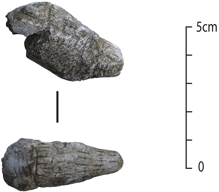 Fig. 7. Carved and incised bone animal head from Wadi Hammeh 27.