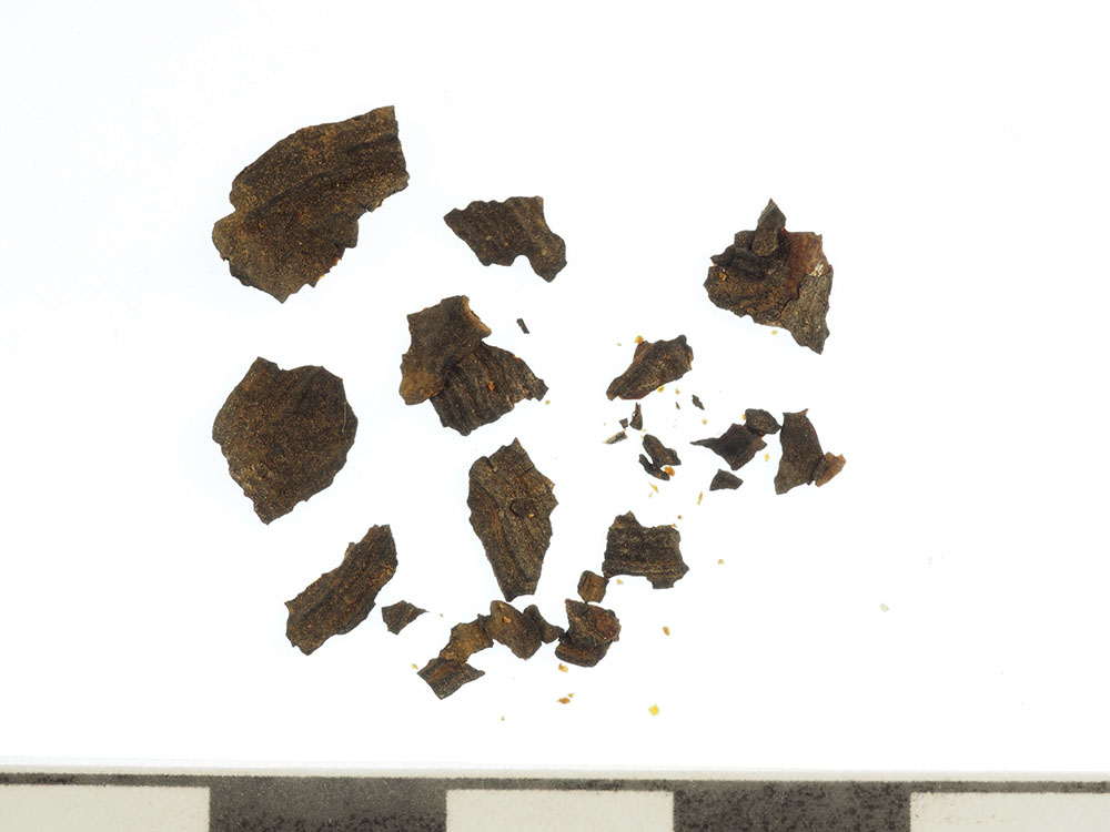 Fig. 2. Fragments of keratin scutes found together with Carapace 2 (G. Bieg; courtesy Penn Museum, Gordion Project Archives, image no. 2014-5312).