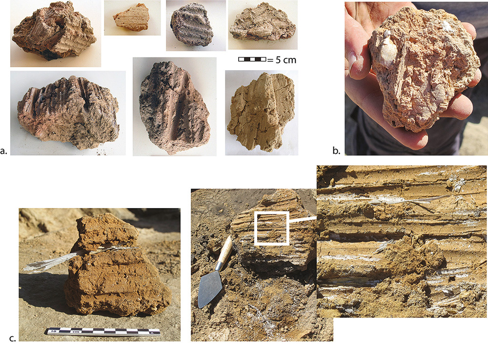 Fig. 2. Impressions in burnt mud walling or roofing chunks: <em>a</em>, from NSS-2 (from HM20724, HM21454, HM22565, HM21466); <em>b</em>, from NSS-1, with oak leaf impression (HM23166); <em>c</em>, from NSS-7 (HM26368 and HM26352).